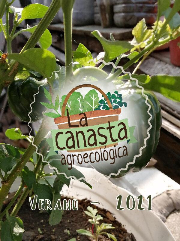 Canasta_verano_2021.jpg