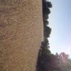 harina-yafun-organica-02-e1429806325254.jpg