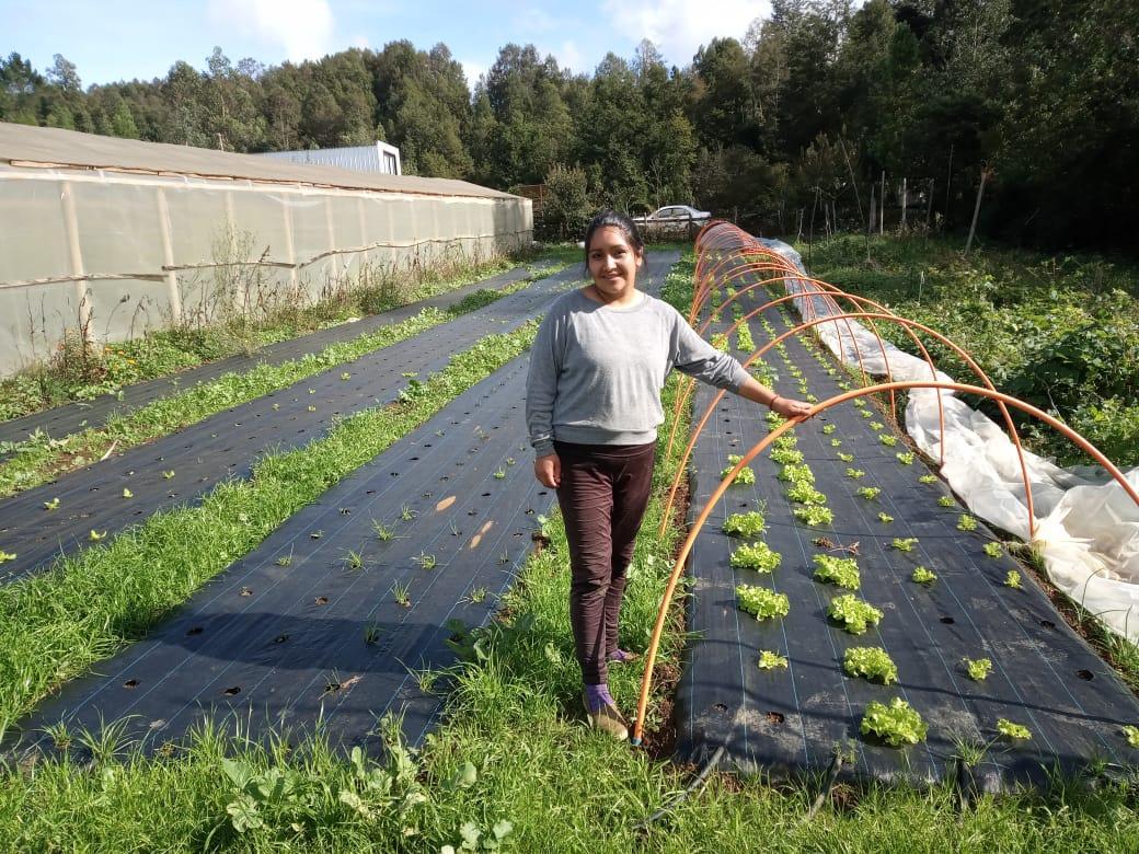 Isabel Inayao en su predio en Paillaco, uno de seis donde se realizan cultivos pilotos de legumbres en Los Ríos